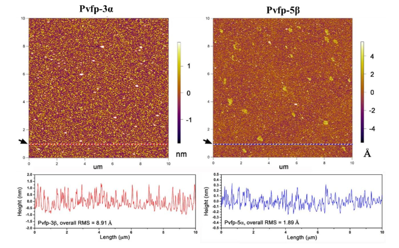 """Supplementary Figure 16 from Petrone et. al """"Mussel adhesion is dictated by time-regulated secretion and molecular conformation of mussel adhesive proteins"""": Atomic Force Microscopy (AFM) of mussel adhesive proteins on mica. AFM images of dry Pvfp-3α and Pvfp-5β adsorbed from 0.02 mg ml-1 solution in 5% acetic acid and 0.25 MO3 on mica. After 20 min adsorption, the mica surfaces were washed with protein -free buffer, and the AFM images show the homogenous distribution of the resulting adsorbed proteins. The height profiles for both proteins are shown in the graphs below, corresponding to the dotted red and blue lines in the respective AFM images (see black arrows)."""