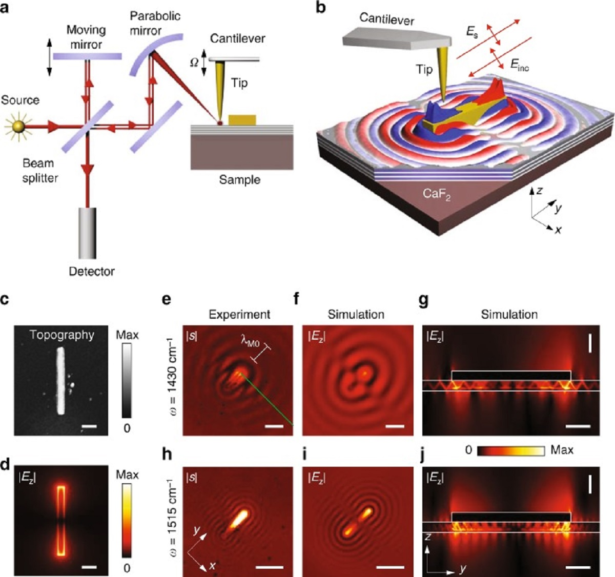 """Figure 4 from """"Launching of hyperbolic phonon-polaritons in h-BN slabs by resonant metal plasmonic antennas"""" by P. Pns-Valencia et al. :   Near-field imaging of the HPhPs launched by the gold antenna. a Schematics of the s-SNOM setup. b Illustration of antenna launching of HPhPs. The spatial distribution of the near-field (shown by the red and blue colors) is adapted from the simulation of Re(Ez). c Topography of the antenna. d Simulated near-field distribution, 