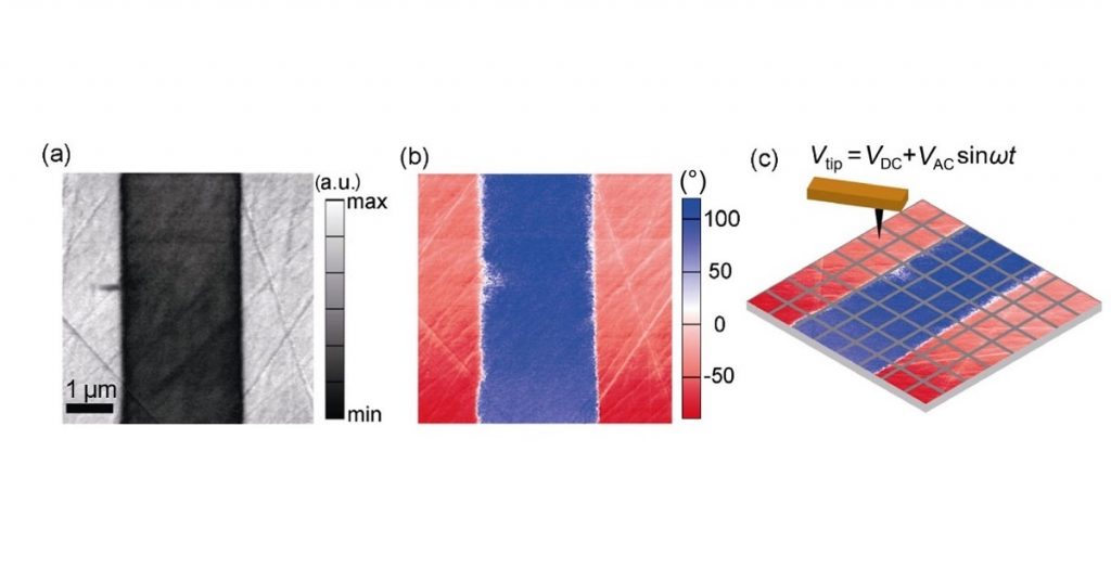 "Fig. 1 from ""Determination of polarization states in (K,Na)NbO3lead-free piezoelectric crystal"" by Mao-Hua Zhang et al: PFM imaging and a schematic of tip movement during SS-PFM mapping. (a) Piezoresponse amplitude and (b) phase contrast images of the KNN single crystals. (c) In SS-PFM, local hysteresis loops are collected using a waveform at each pointon 25 × 25 mesh. The domain wall shown in Fig. 1(b) orients along [001]c."