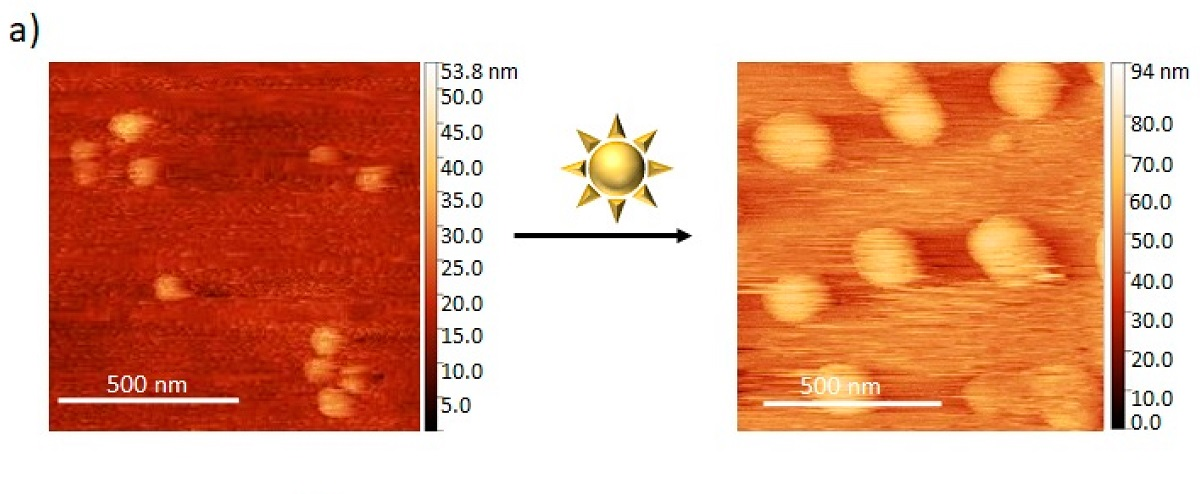 "Figure 1 a from ""Photoresponsive Photoacid-Macroion Nano-Assemblies"" by Alexander Zika  et al: Assembly formation and photoresponse of the dendrimer–photoacid system at a charge ratio of r = 0.25: (a) AFM height images before (right) and after (left) irradiation.  Figure 1 a from ""Photoresponsive Photoacid-Macroion Nano-Assemblies"" by Alexander Zika  et al: Assembly formation and photoresponse of the dendrimer–photoacid system at a charge ratio of r = 0.25: (a) AFM height images before (right) and after (left) irradiation."