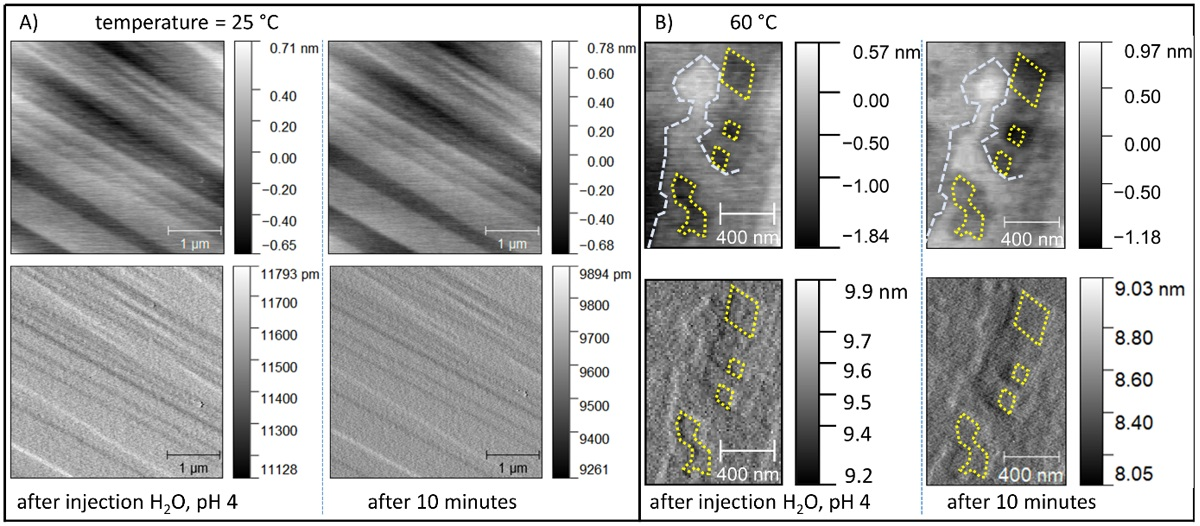 "Figure 8 from ""Pb2+ Uptake by Magnesite: The Competition between Thermodynamic Driving Force and Reaction Kinetics"" by Fulvio Di Lorenzo et al:  In situ observation of {10.4} surfaces of MGS in contact with acidic solution, pH 4 (HNO3). The images were acquired in tapping mode. The first row corresponds to height channels, while the second row reports the respective amplitude channels. (A) The dissolution at 25 °C is sluggish and it is not possible to detect any dissolution feature. (B) In the same conditions but at higher temperature (60 °C), dissolution features are observed on the {10.4} surfaces of MGS, despite the retrograde solubility. Yellow and blue lines of constant size are used to highlight the evolution of etch pits and step edges, respectively. This evidence demonstrates that the existence of kinetic barriers controls the dissolution of MGS at room temperature conditions. NanoWorld Arrow-UHFAuD AFM probes were used."